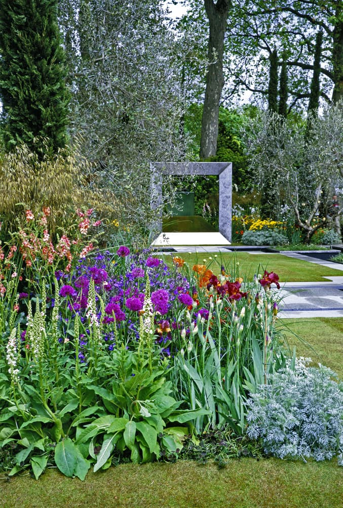 a border in a modern garden with lupins, irises and peonies amongst others