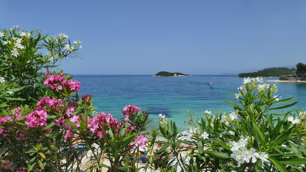 Pink and white Nerium oleanders with clear blue sky and crystal water in the background