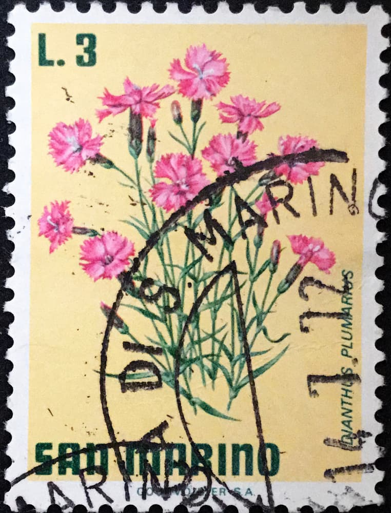 San Marino stamp depicting Dianthus plumarius flowers