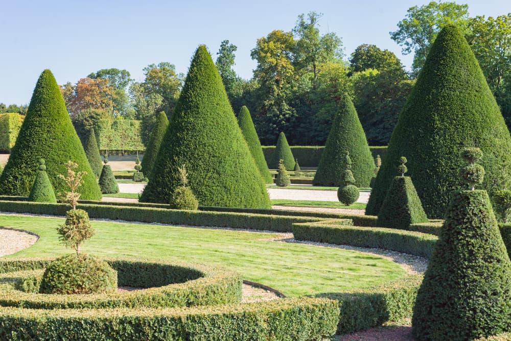 triangular shaped topiary trees