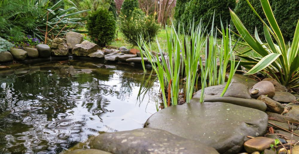 a serene garden pond
