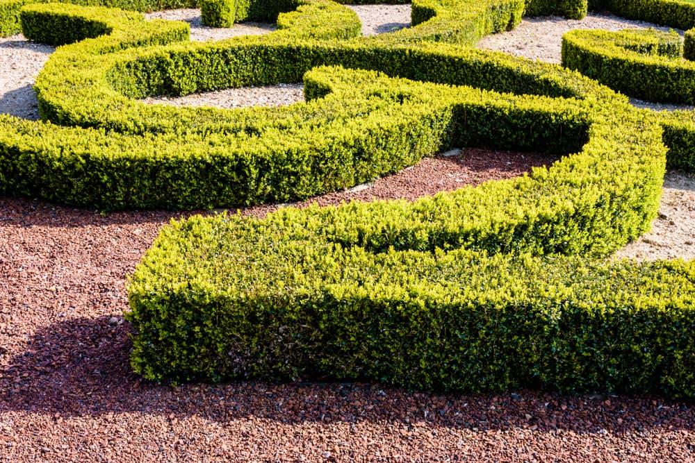 A parterre de broderie in a French garden