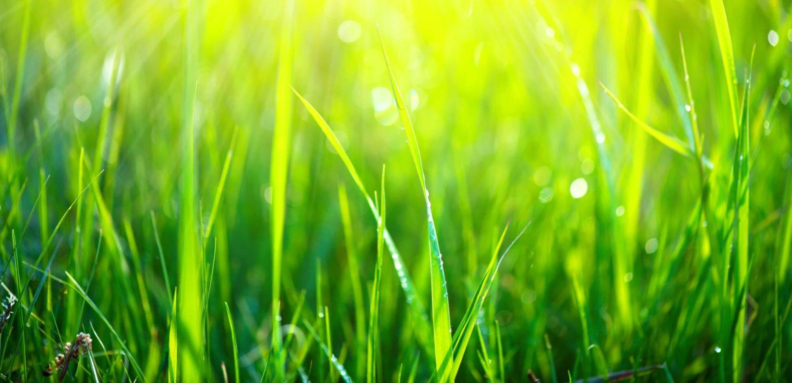 a lush green lawn