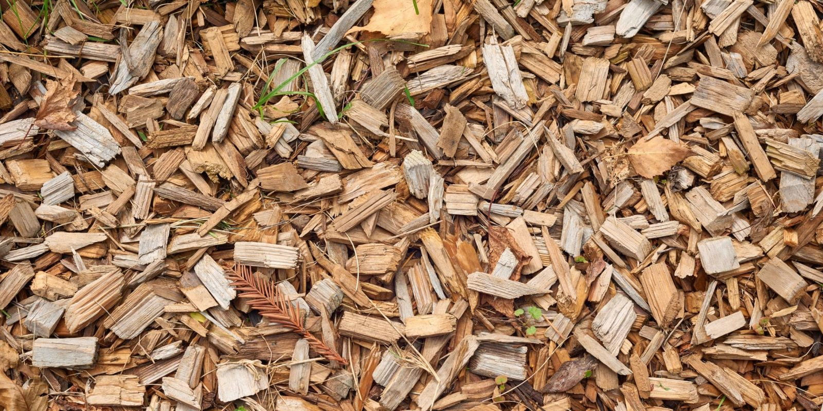 cedar wood chips covering the ground