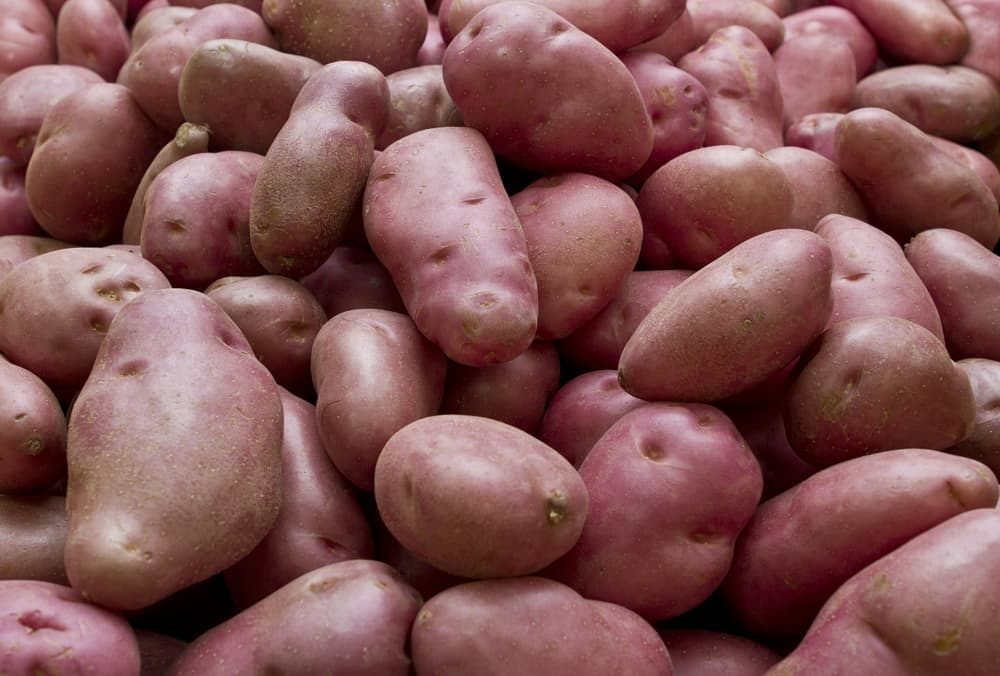 a pile of desiree potatoes