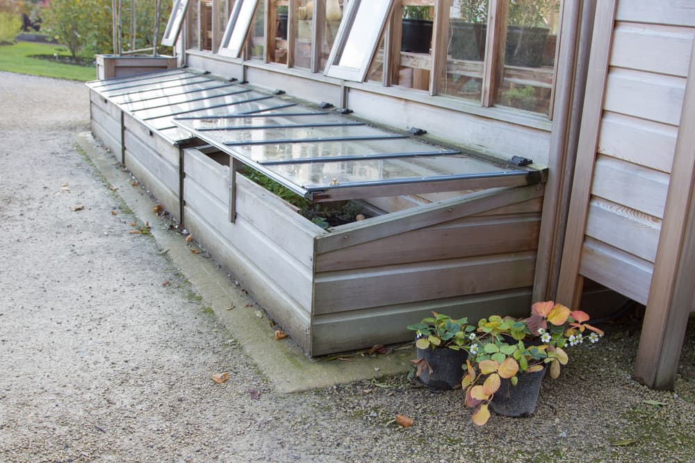 coldframe resting against a greenhouse
