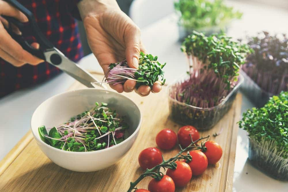 woman preparing microgreens for use in a salad with fresh tomatoes on the vine