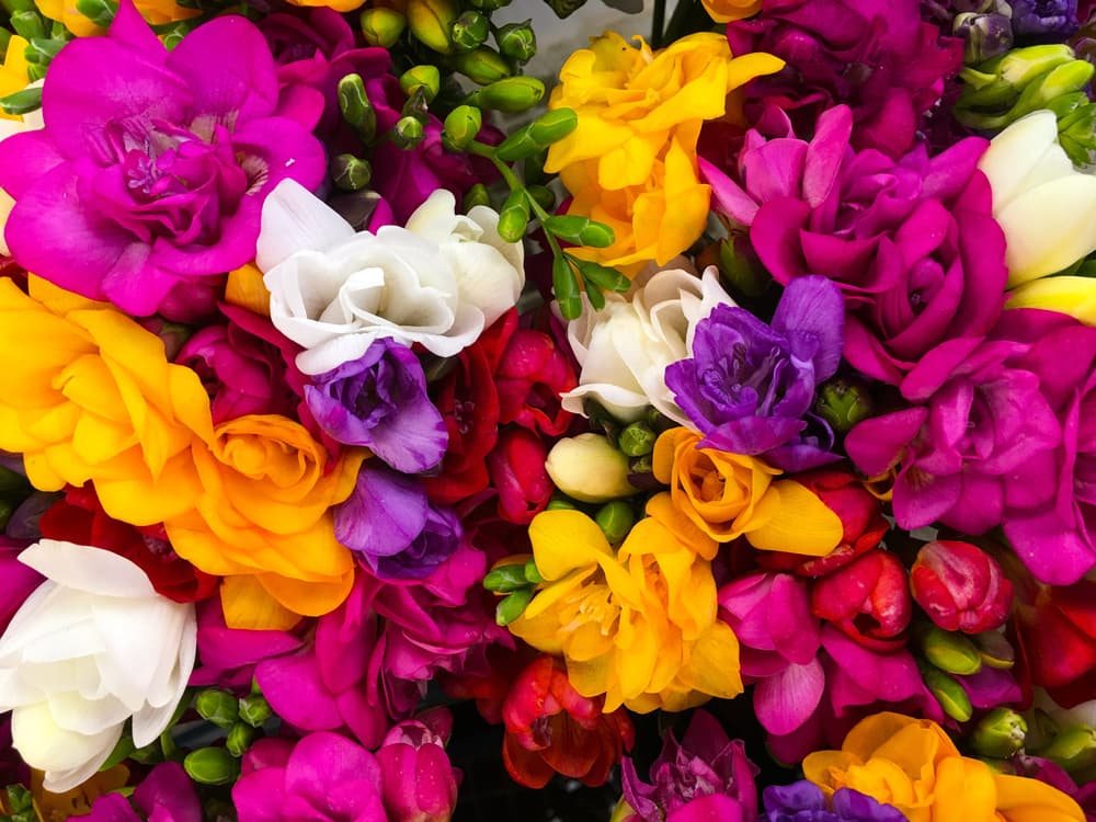 close up of a freesia bouquet