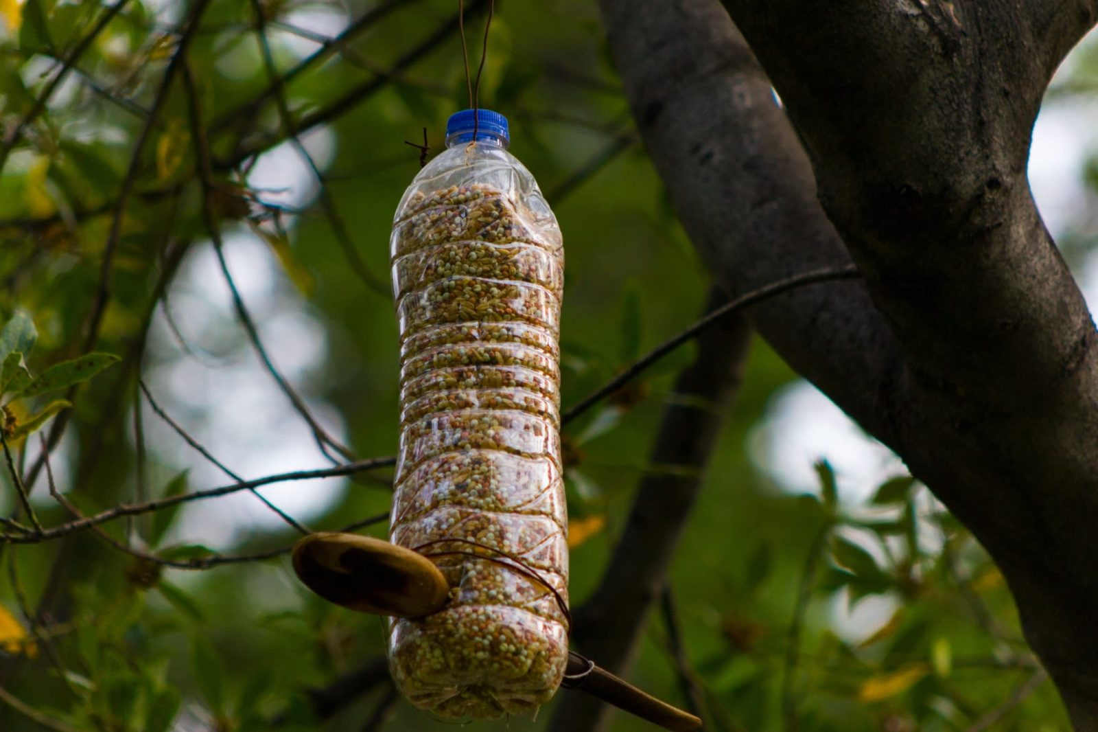 a homemade plastic bird feeder hanging from a tree branch
