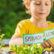a young boy tending to spinach and lemon plants