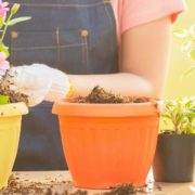 woman potting plants into plastic garden containers