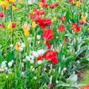 tulips and bluebells growing in a garden border