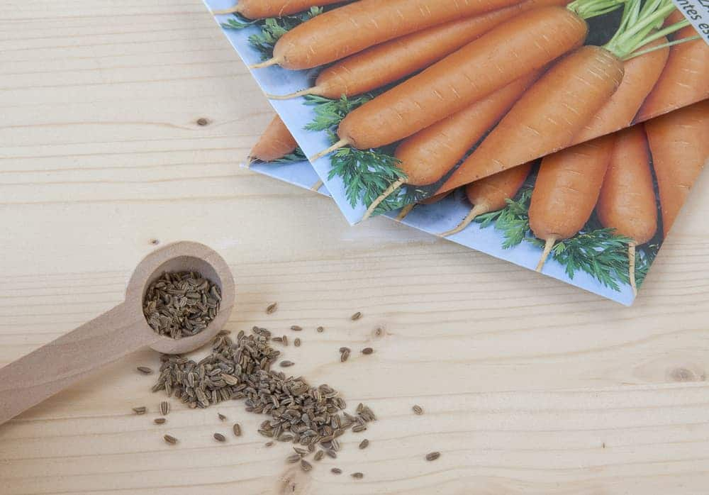 carrot seeds on a wooden table